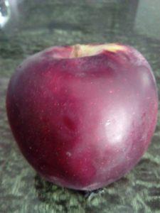 vocne-sadnice-stubasta-jabuka-rumeno-vreteno